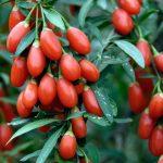 Sadna vitaminska bomba za večjo imunsko odpornost
