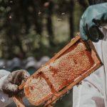 Nujna oprema za vsakega modernega čebelarja