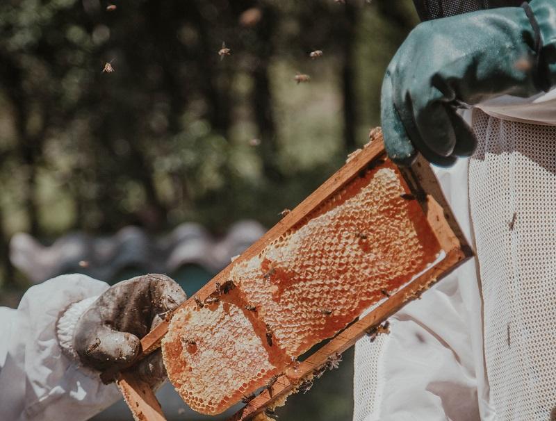 Čebelarska oprema za vse izkušene kot tudi novopečene čebelarje